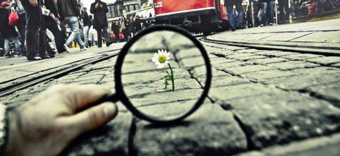 fleur-de-pavc3a9